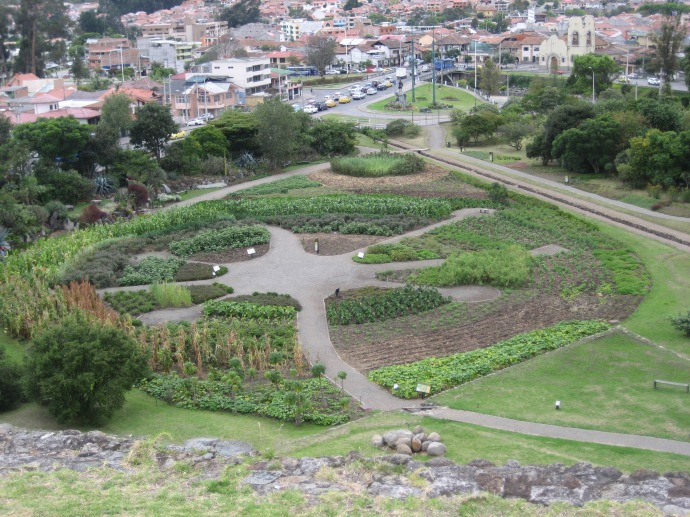 The garden, containing many native Ecuadorian food crops, as seen from the upper level.