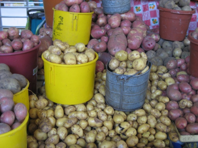 Some of the many varieties of potatoes in the market