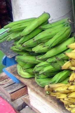 Plantains on the market shelf, with our normal bananas to the right