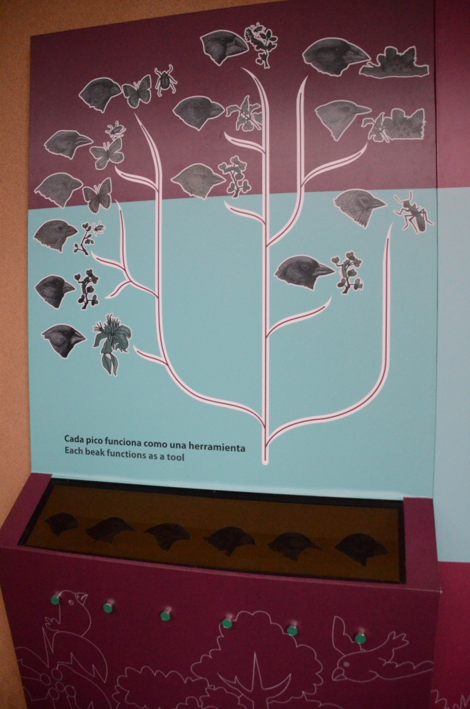 A display at the Interpretive center showing the different type of finches found on the Galapagos Islands.