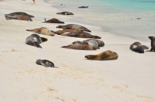 A group of sea lions soaking up rays on the beach