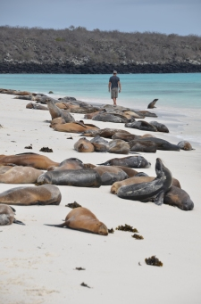 Here the sea lions coexist with tourists