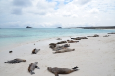 Sea lion siesta time