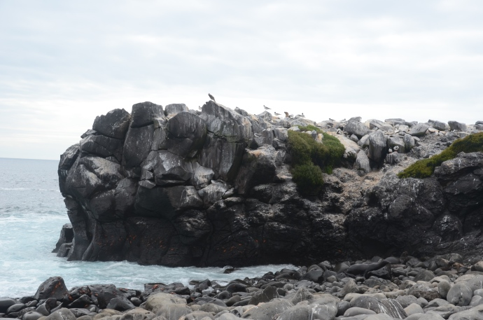 The Rookery at Suárez Point on Española Island