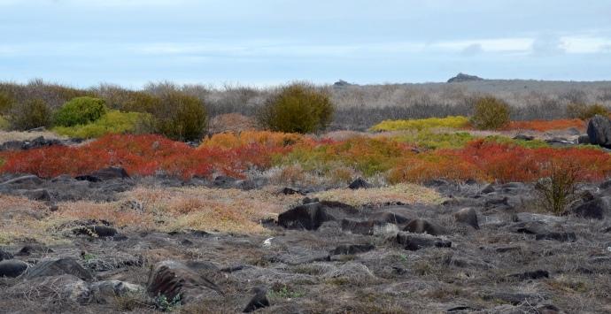 The colorful plant life on the top of Española Island