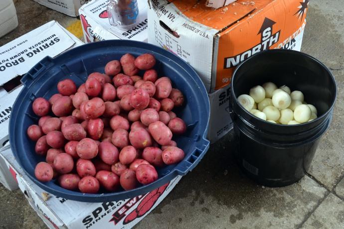 Potatoes and onions awaiting a hot bath. (Or do you say potatos?)